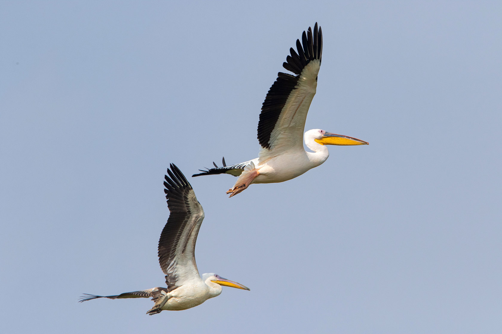 Birds at Chhatrasagar
