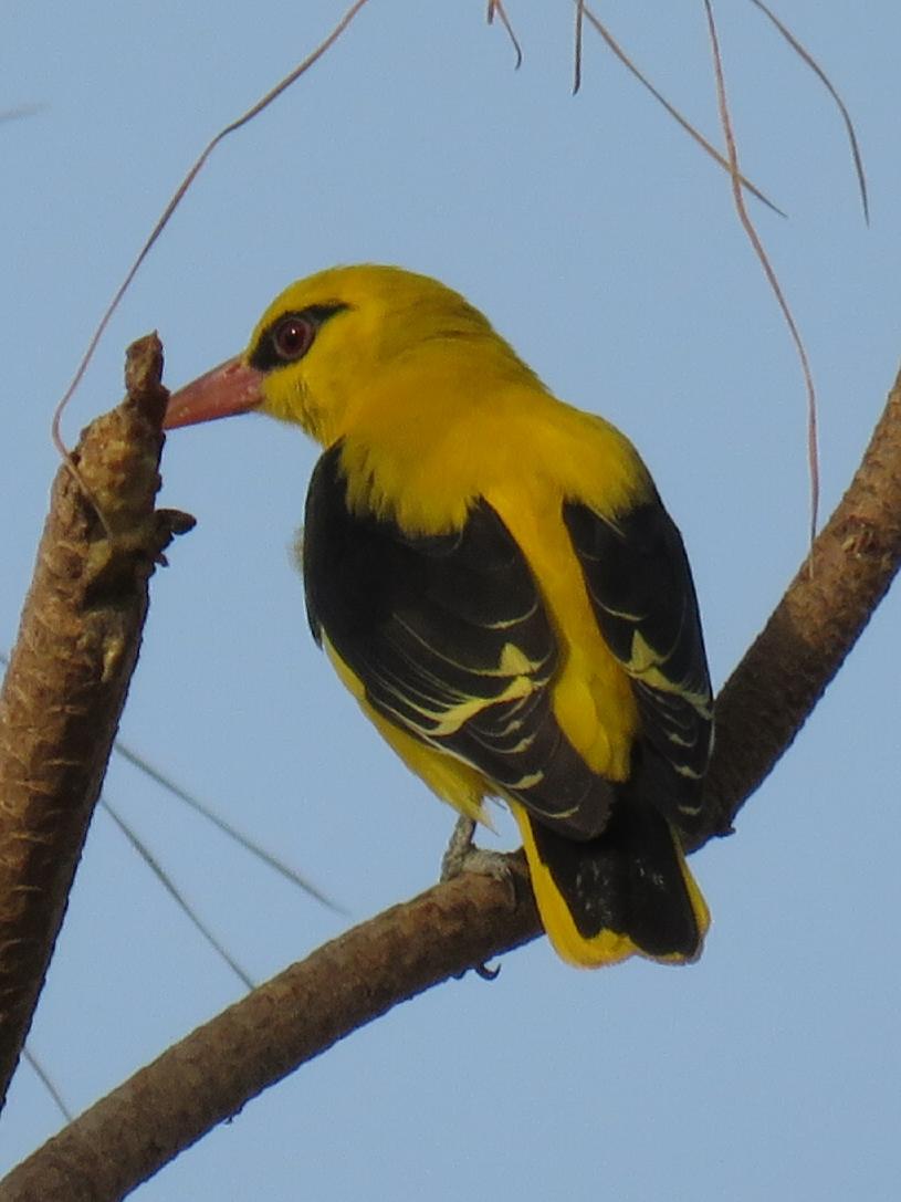 Birds at RAAS Chhatrasagar